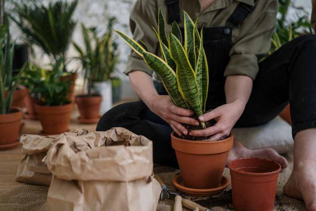 placing plants in pots